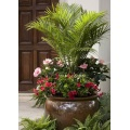 Specialty Tropical Annual Plants