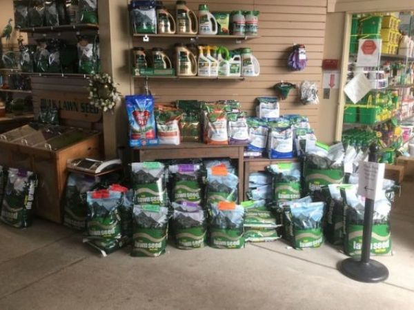 Great Selection of Grass seed